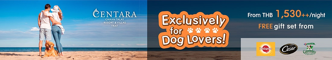Bring your dog and we'll make you both feel special!